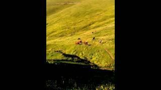 Ambarlı Yaylası Trabzon Maçka Alataş Galyan Köyü