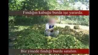 Komik Karadeniz Giresun Fındık Trabzon Yayla Videosu
