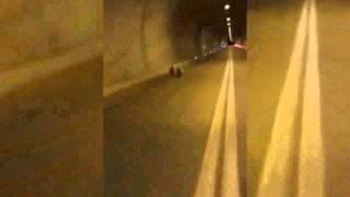 Artvin'de Yavru Ayılar Tünele Girerse